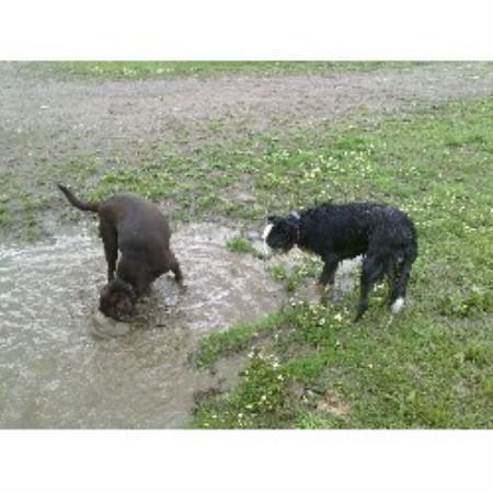 Dog Training Rushden