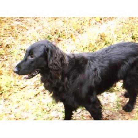 Dog Grooming Haddington