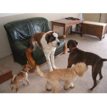 Fern Dog Training Reviews