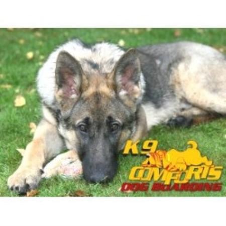 Dog Sitters Surrey Uk