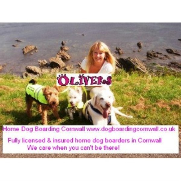 Oliver's Dog Boarding in Cornwall Liskeard