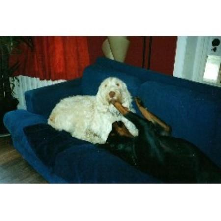 Top Dog Sitters Cartmel, Cumbria Picture 5