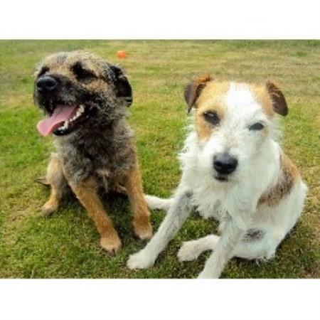 Dog Home Boarding Exeter