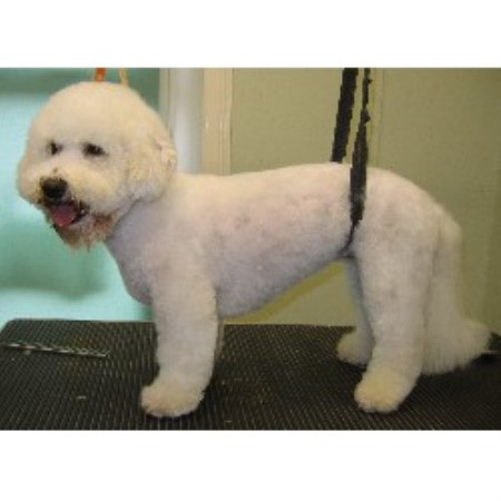 Dog Walking In Ilford