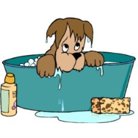 Dog Grooming Rochester Kent