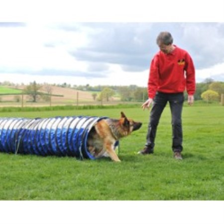 Mike Gilmore Dog Trainer Reviews
