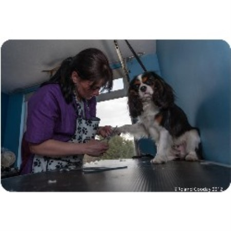 Four paws dog grooming sompting west sussex bn15 0ll for 4 paws dog salon