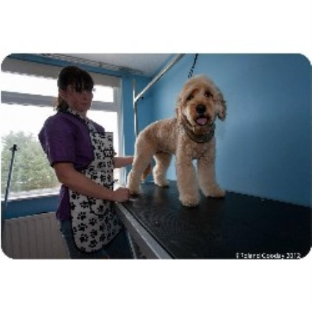 Four paws dog grooming in sompting west sussex id 127049 for 4 paws dog salon