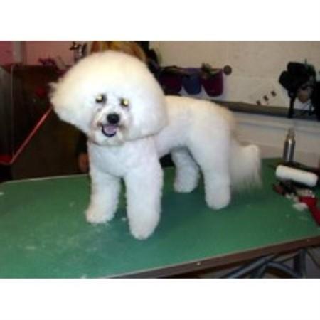 Dog Grooming Margate