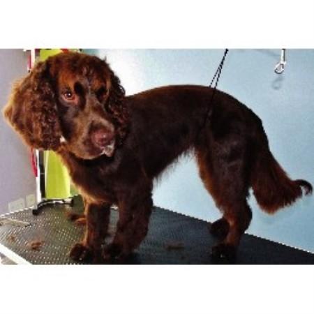 Dog Grooming Swindon