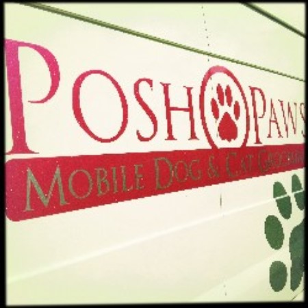Incredible Posh Paws Mobile Dog Grooming Camborne Cornwall Tr14 8Ht Home Interior And Landscaping Analalmasignezvosmurscom