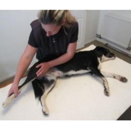 Dog Grooming Near Horsham