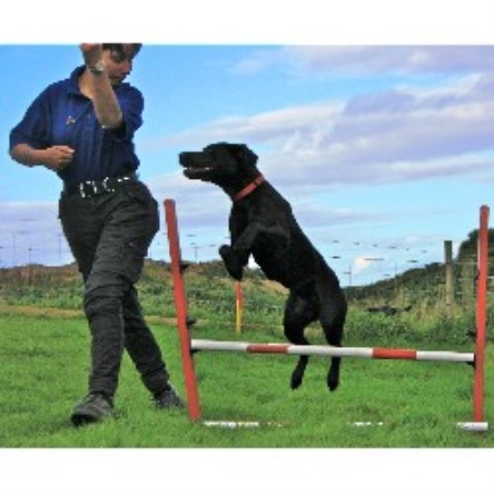 Dog Agility For Sale Aberdeenshire