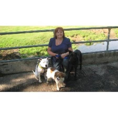 Dog Training Birstall Leicester