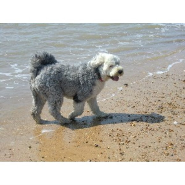 Dog Walks Felixstowe