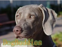 Dogbuddies Bromley Greater London Logo