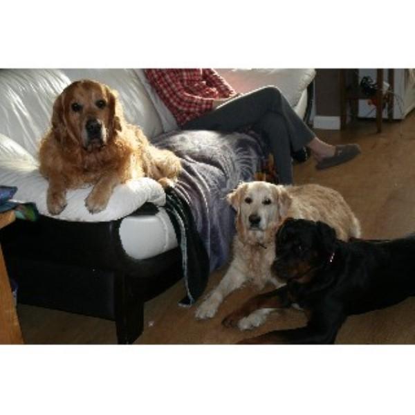 Top Dog Training School Amp Home Boarding Erith Kent Da8 1qb