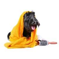 Linda Paterson Dog Grooming