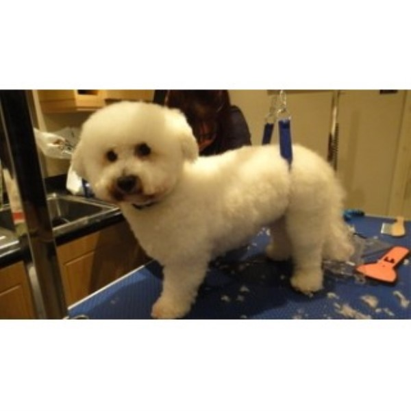 Tail Ends Dog Grooming Southampton