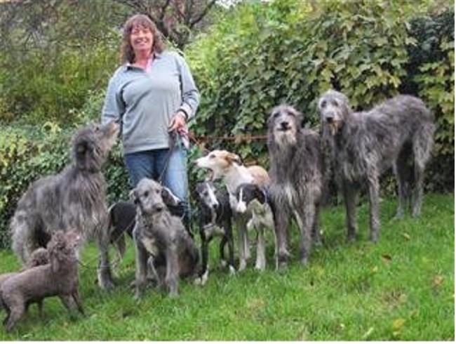Dog Training Welshpool