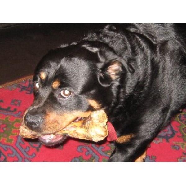 Dog Grooming Whitehaven