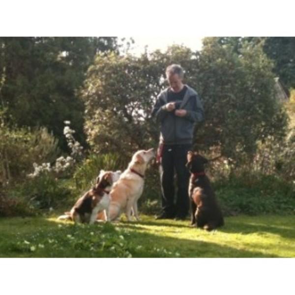 Stonehouse Dog Training