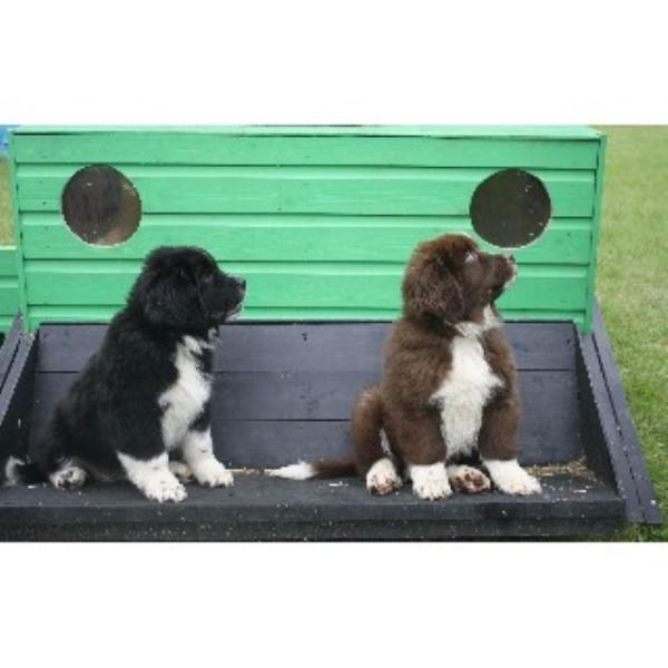 Peaceful Pups Dog Training