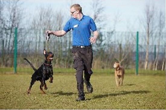Wakefield Dog Training Centre Reviews