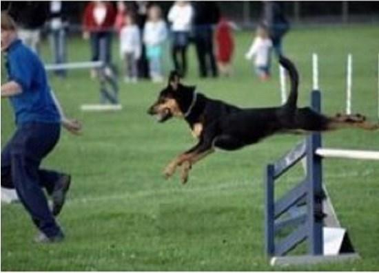 Dog Training Larkhall