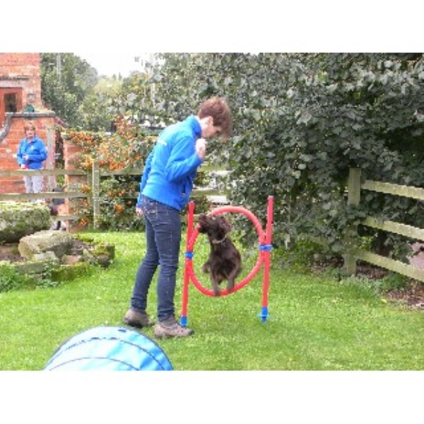 Worcester Dog Training Centre Worcester, Worcestershire Picture 5