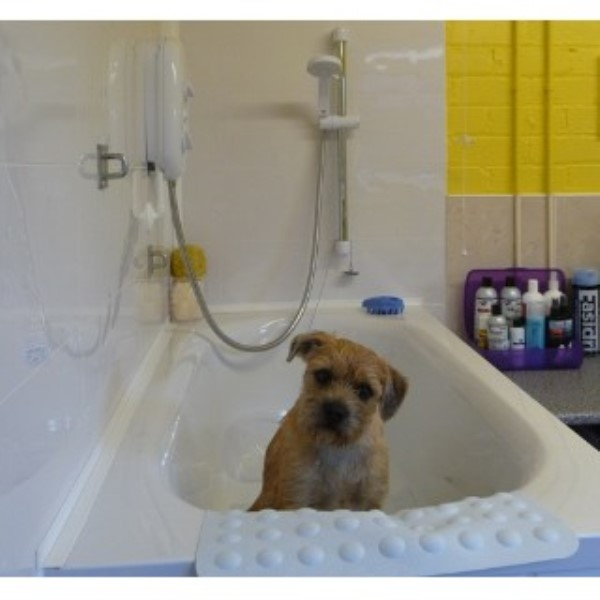 Tails a wagging professional dog grooming in ramsbottom for A wagging tail pet salon
