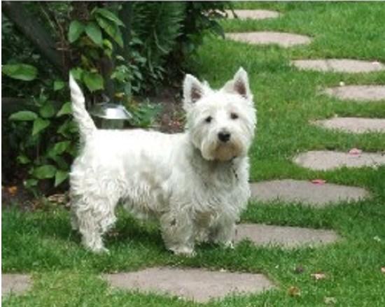 Dog Kennels For Sale In West Midlands