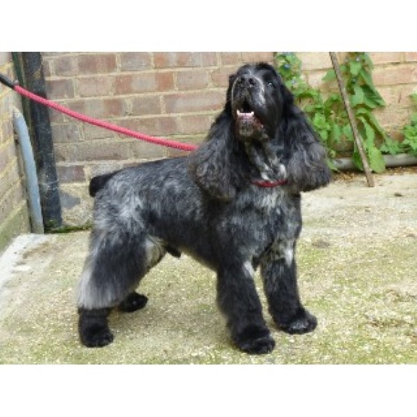 Waggy Walkers Dog Training Co Uk