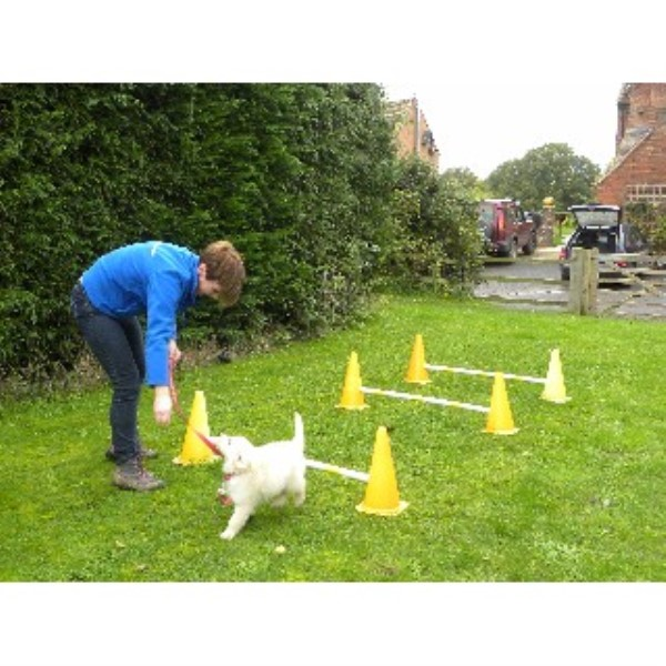 Worcester Dog Training Centre Worcester, Worcestershire Picture 3