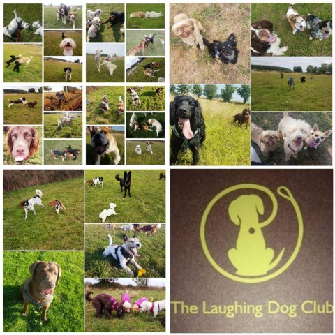 The Laughing Dog Club
