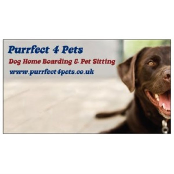 Listings for dog boarding kennels near south shields tyne for Dog home boarding near me