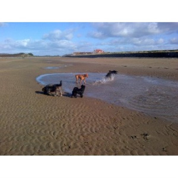 Happy Friends Dog Walking and Pet Sitting Weston-Super-Mare