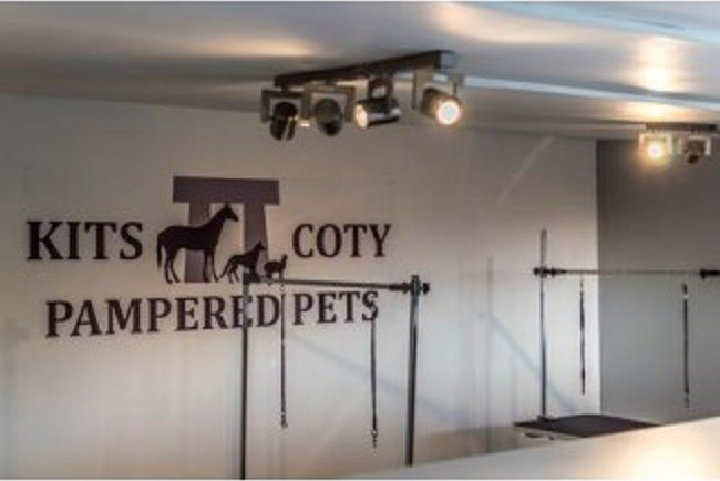 Kits Coty Pampered Pets Aylesford Kent Me20 7ew