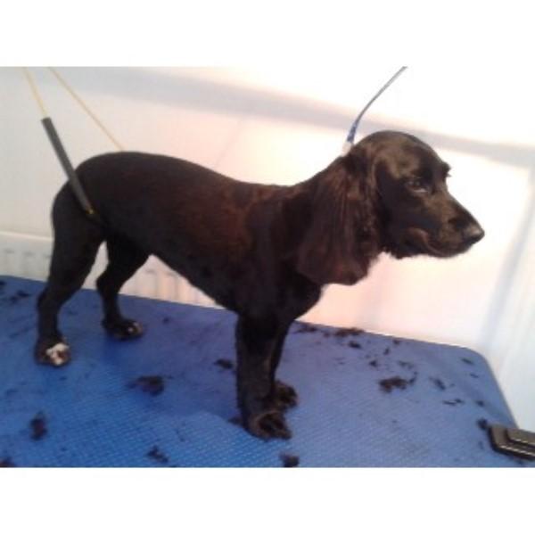 Dog Training Wilnecote Tamworth