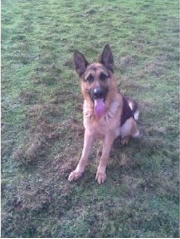 Dog Home Boarding Bury St Edmunds