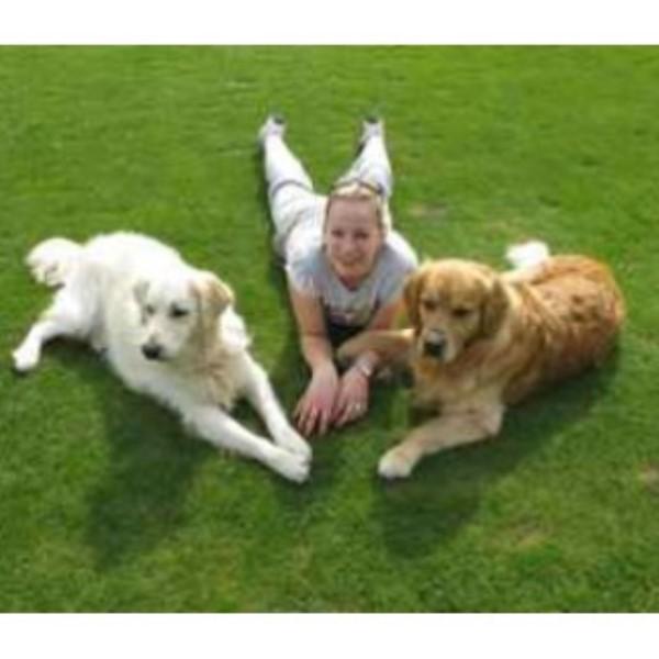 Top Dog Training School Amp