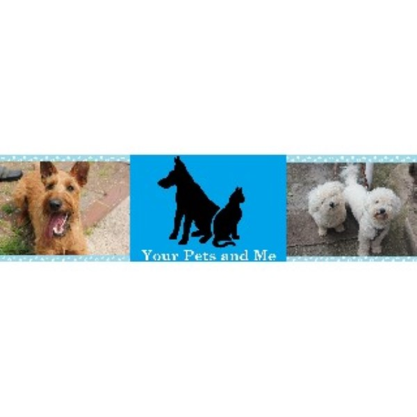 How To Start A Dog Walking Service Uk