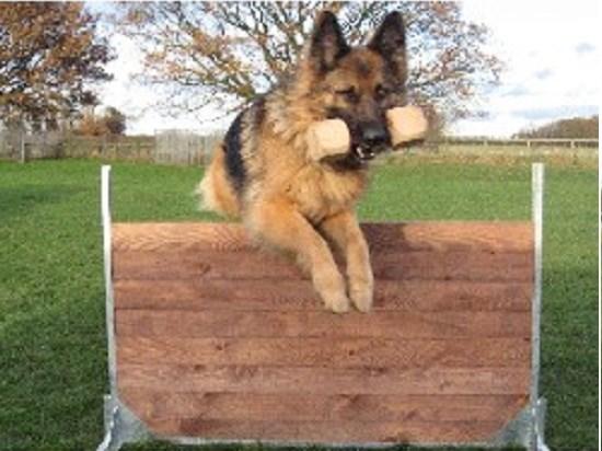 Dog Boarding Derbyshire