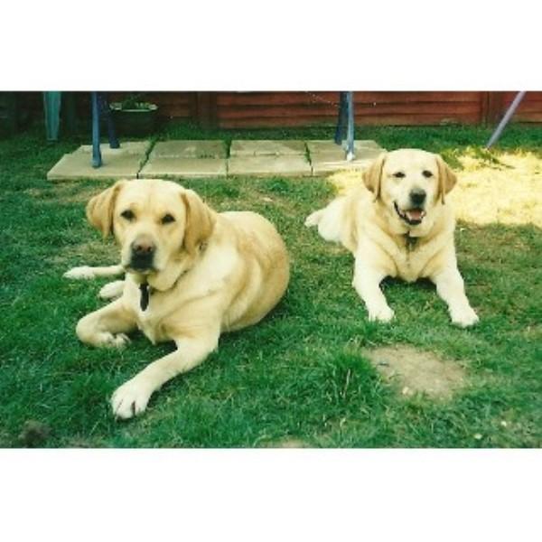 Dog Grooming Stowmarket