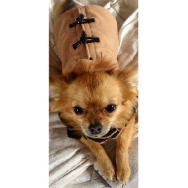 Dog Training In Mattersey