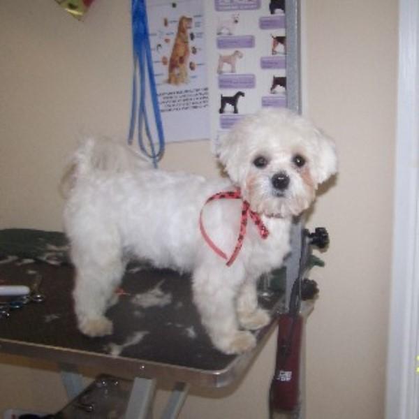 Dog Grooming Hampton Street Hampton