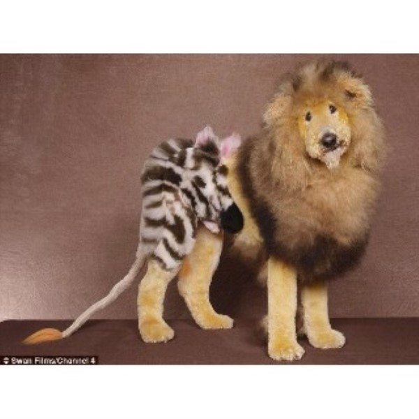 Dog Grooming Stirling