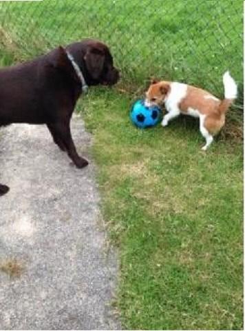 Canine Comrades Helston Cornwall Tr13 8dd