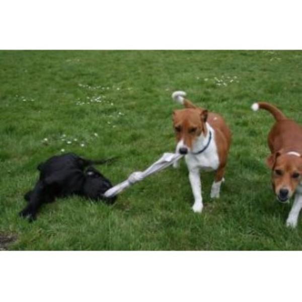 Walks Near Wymondham Norfolk With A Dog