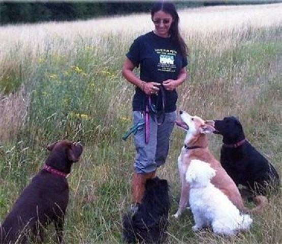 Dog Home Boarding Northamptonshire